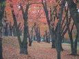 松本の城山公園